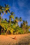 plage de la Guyane
