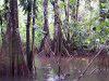 marais de la rivière Kaw